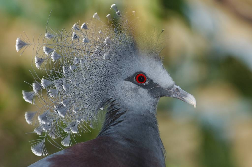 pigeon_l