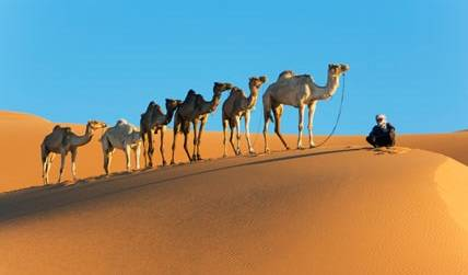 Desert Safari-Arabian Adventures