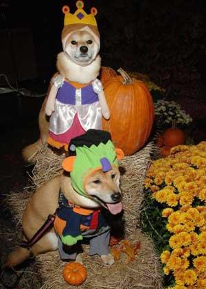 Dogs-Halloween-Costume