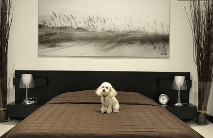 A Puupy Suite at D Pet Hotels