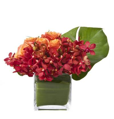 Cherry Brandy Roses, Mokara Orchids