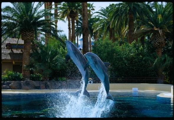DolphinHabitat