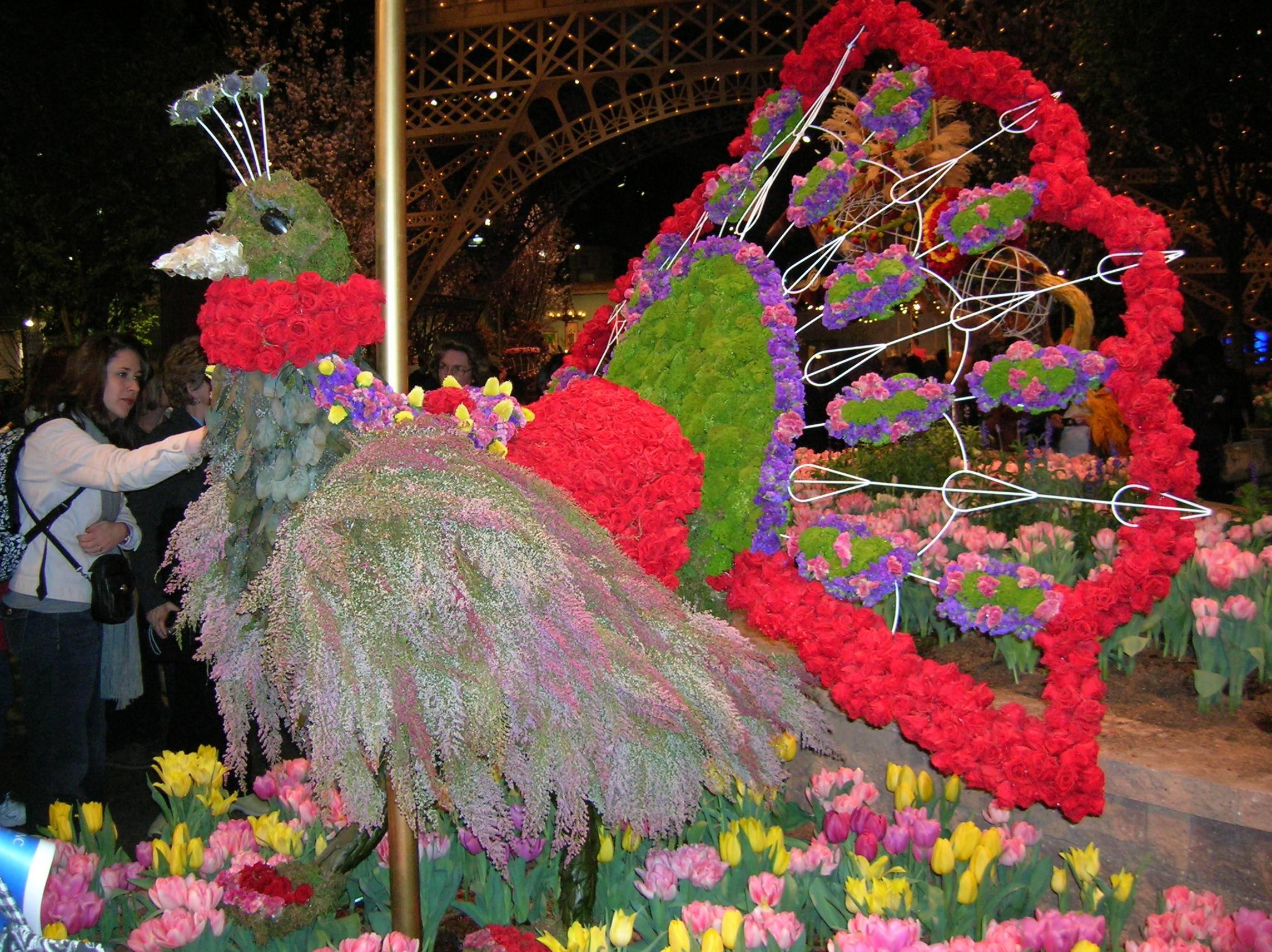 flower show 2011 001