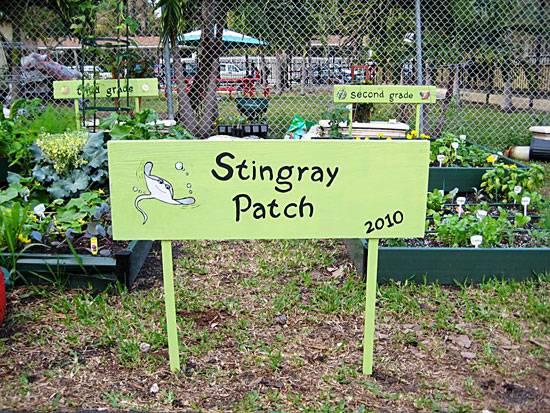 stingraypatch_web