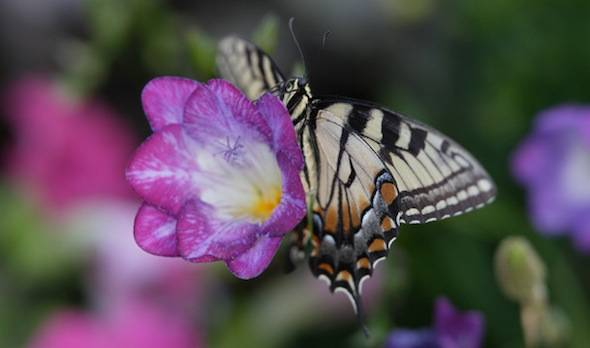 Spring Butterfly Exhibit At The Desert Botanical Garden Haute Living