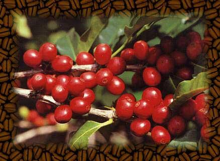 redbeans (438×321)