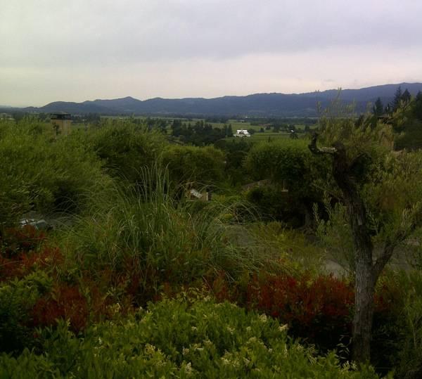 A Napa Valley view