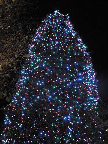 Chuck Scarborough Hosts Annual Tree Lighting Ceremony In