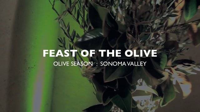 Feast of the Olive