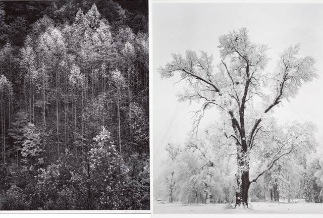 Ansel-Adams-trees