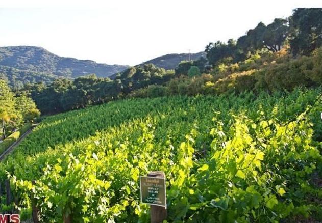 Vineyard11