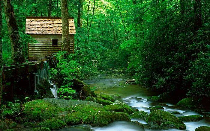 pent-house-nature-wallpaper