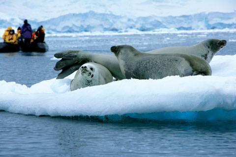 185-seals-zodiac-high-rez