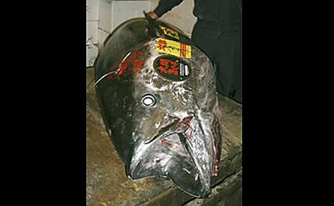 tuna_blog