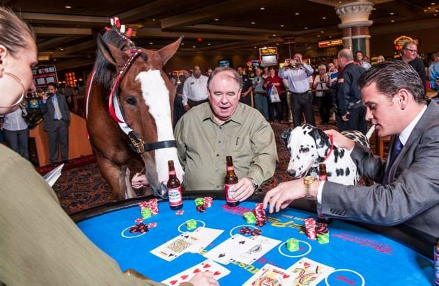 South Point_Clydesdale Blackjack 1