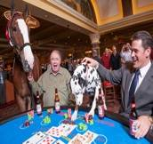 South Point_Clydesdale Blackjack_172