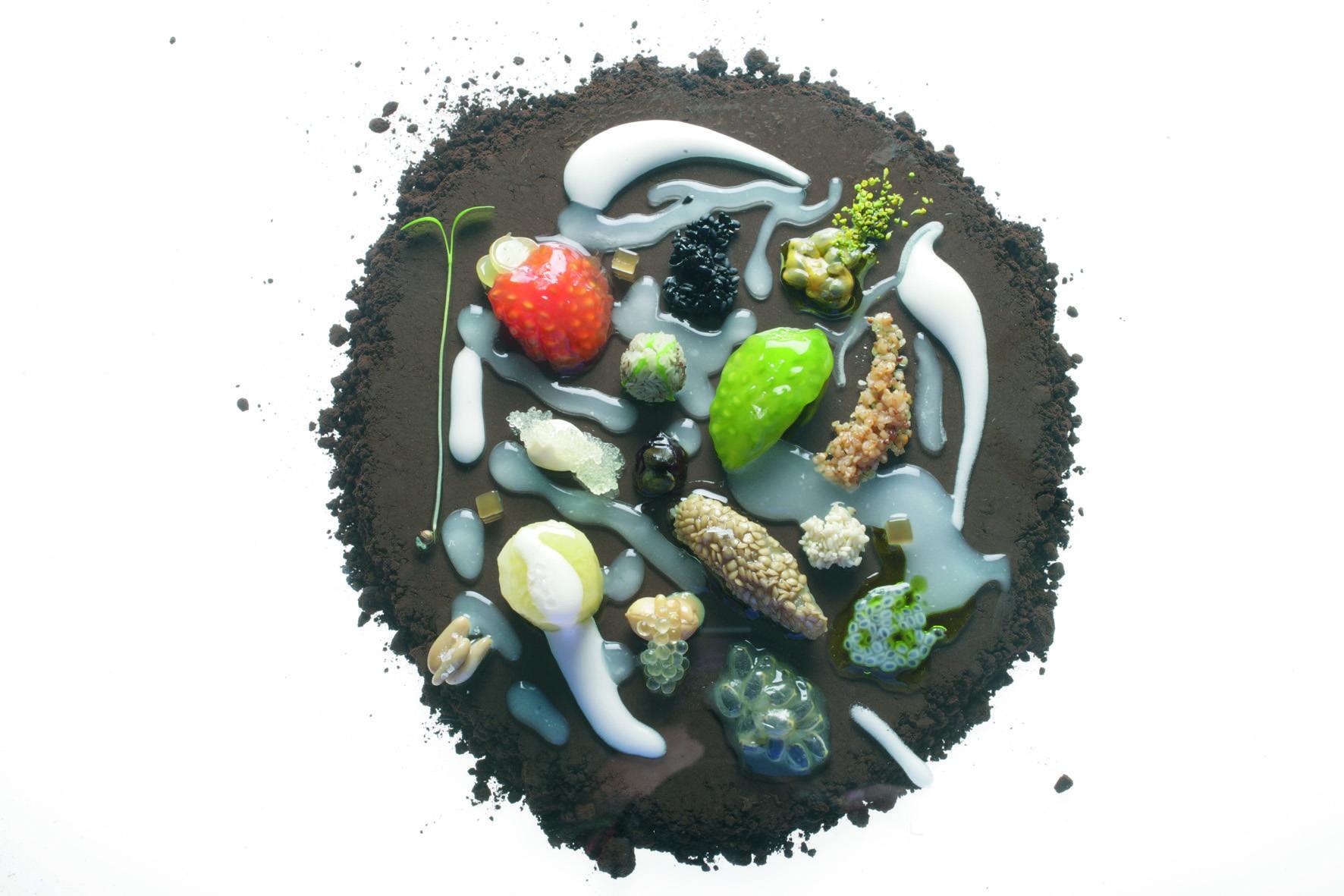 7. The Seeds 2006 © Fotógrafo Francesc Guillamet