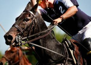 Polo for Lyme 2