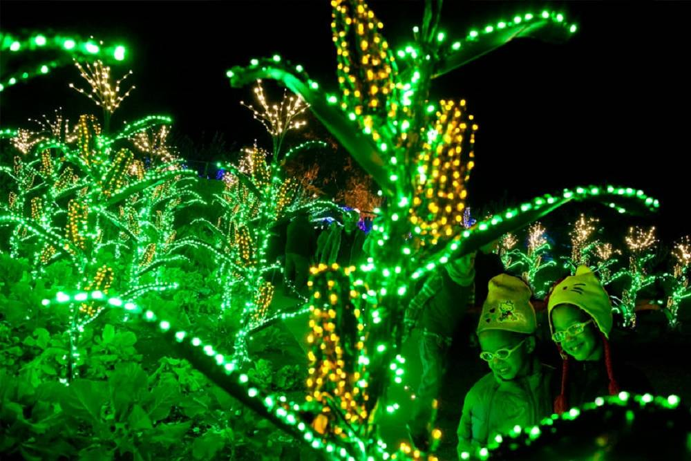 Garden Lights and Holiday Nights at the Atlanta Botanical Garden ...