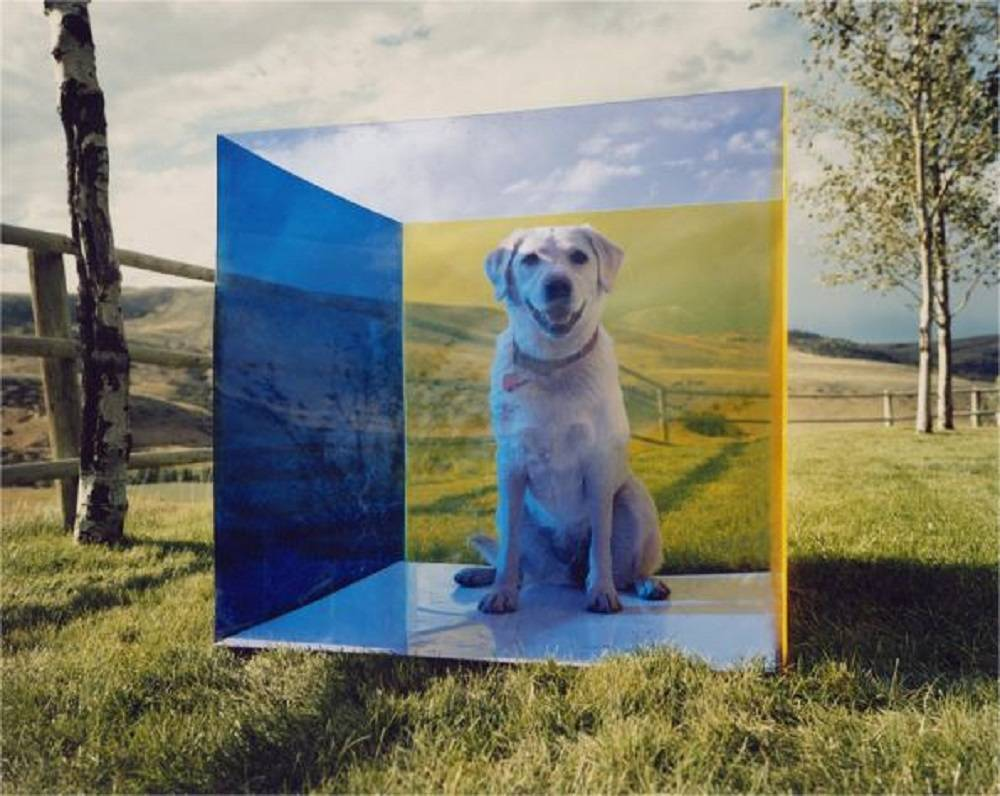 untitled (montana dog) from COLORSHAPE Series