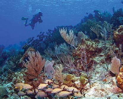 aruba-diving
