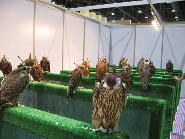 falcoln-2