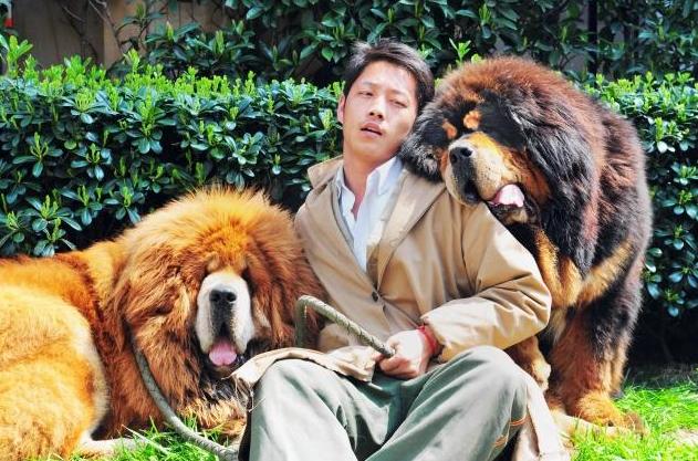 Tibetan-Mastiff-Puppy