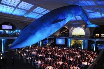 2402-Milstein Hall of Ocean Life_RM