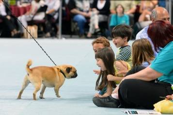 Contestant Bogo greets excited spectators during The Animal Foundation's 11th annual Best In Show, Vegas, 4.27.14