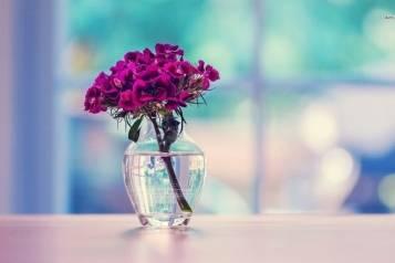 Dianthus-in-a-Vase