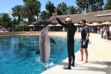 The Mirage – Trainer For A Day – Dolphin Tail Walk