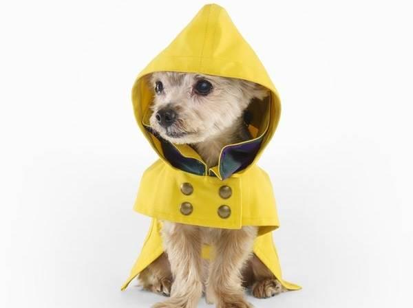 ralph lauren raincoat