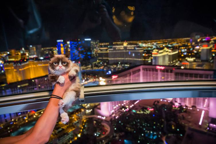 Grumpy Cat rides The High Roller at The Linq in Las Vegas, NV