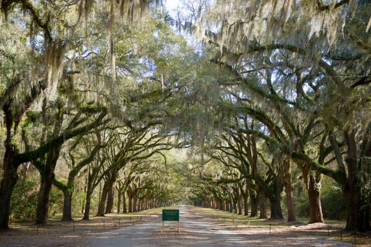 Savannah ambiance