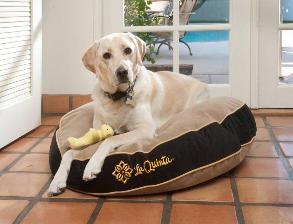 LQR-canine-suite
