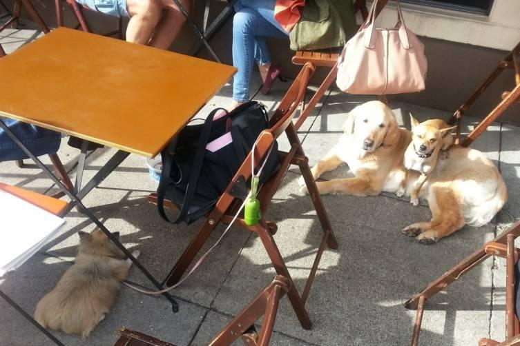 best dog-friendly restaurants in sf bay area