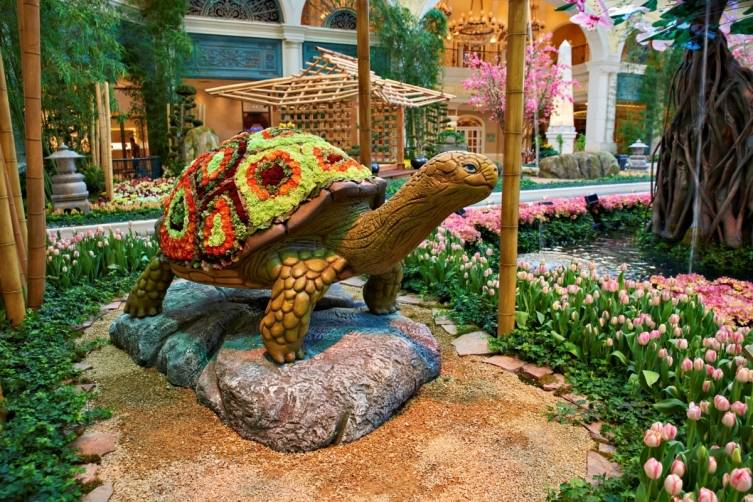 Bellagio Conservatory - Turtle
