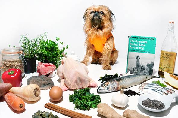 LOW RES Holistic Foodie Dog