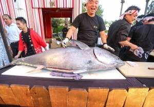 Naked Fish carves up a 240lb tuna at UNLVino's Sake Fever.