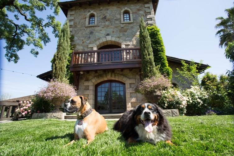 Dog Friendly Places In Napa