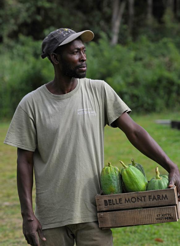 Man gathering fresh fruit