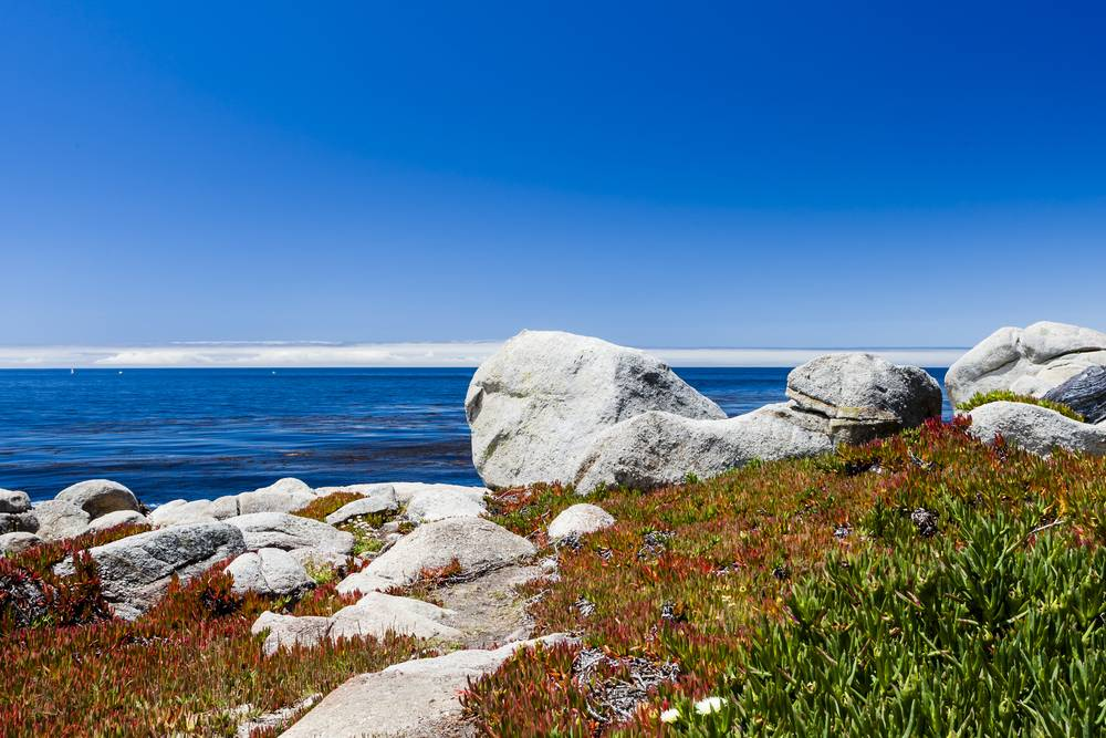 Pescadero Point at 17 Mile Drive