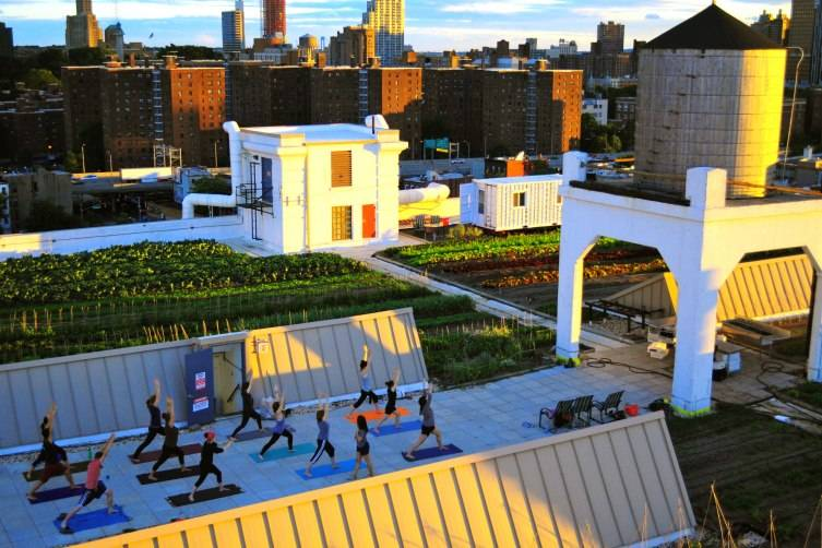 Sunset-Yoga-at-the-Brooklyn-Grange-farm-in-the-Brooklyn-Navy-Yard