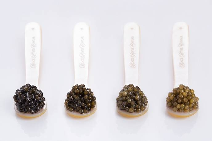 black river caviar  spoons