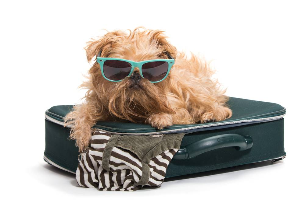 Traveling puppy