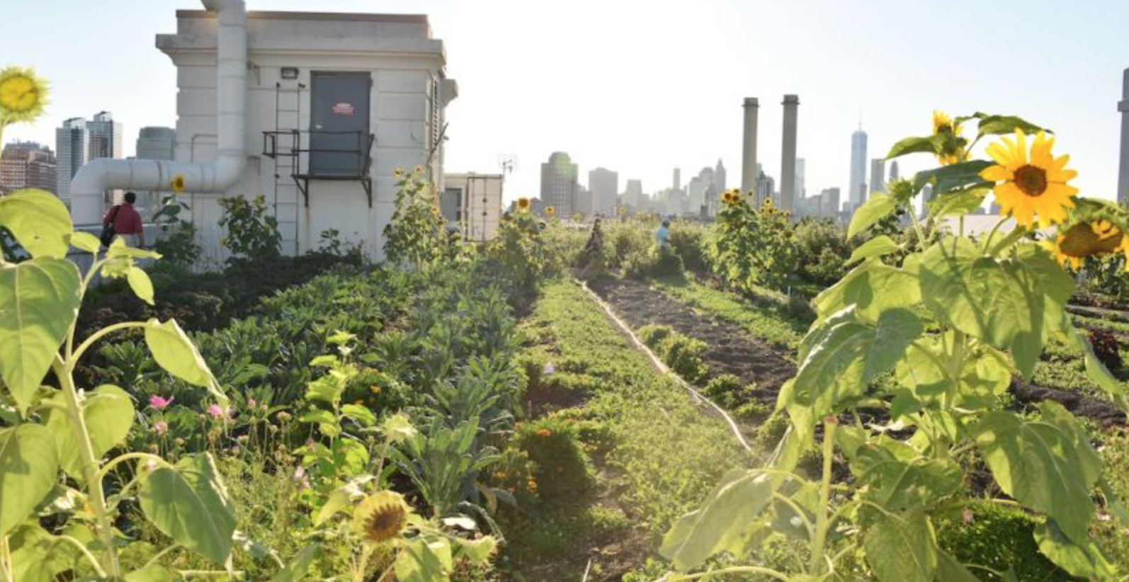 Brooklyn Grange's rooftop farm boasts organic tomatoes, peppers, kale, roots, herbs and other seasonal crops.