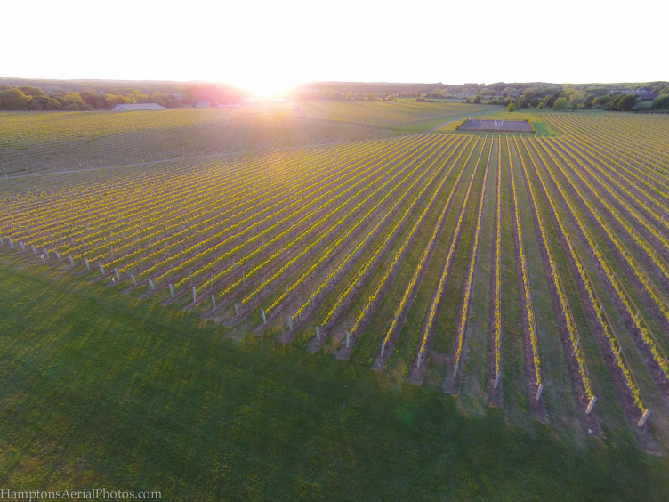 Vineyard-Aerial Shot-June 2014 copy