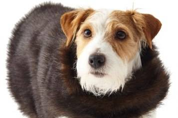Faux-Fur Small Dog Coat
