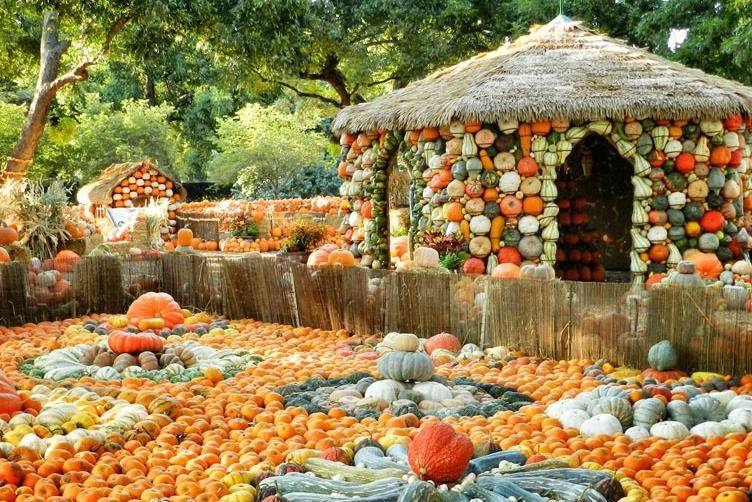 The Pumpkin VIllage at the Dallas Arboretum is fun for kids of all ages.