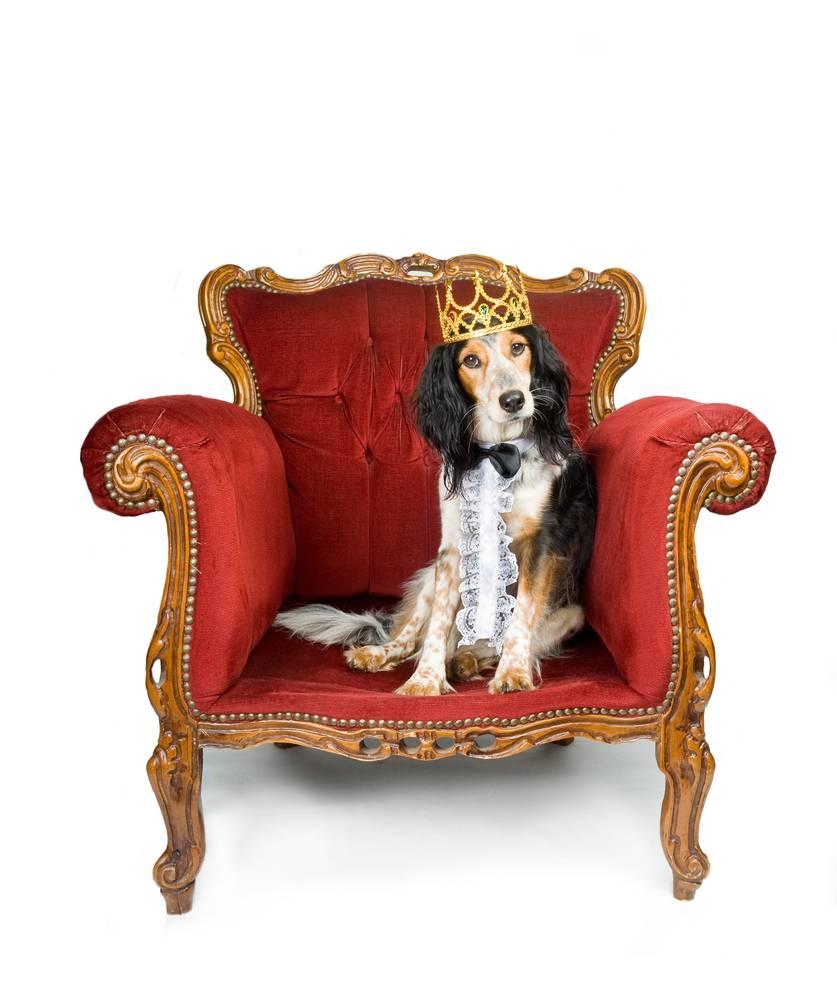 собака в кресле картинка задержании